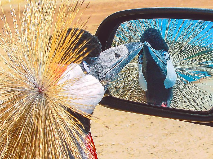 Люблю, картинки про птиц и животных смешные